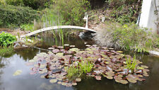 Teichbrücke, Koibrücke, Gartenbrücke, Schwimmteich, Teichsteg inkl. Geländer