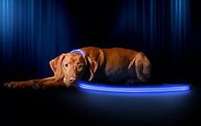 Ruff Life Leash -Light Up LED Night Walk Safety Pet Dog Restraint Leash-US STOCK