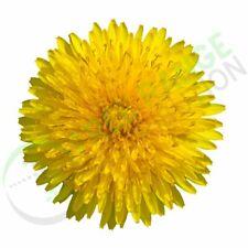 Pure Dandelion Root Powder - 100% Natural Diuretic - 250g, 500g, 1Kg, 5Kg, 10Kg