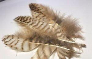 5pcs SECONDS Delicate Natural Genuine Owl Plumage Feathers 8-12cm DIY Craft