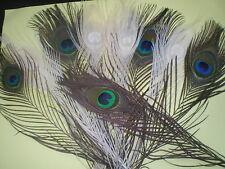 5 plumes blanche + 5 vertes et bleues paon   23 cm