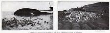 SPITZBERG SPITSBERGEN CAPTURE BALEINE WHALES NORVEGE IMAGE VERS 1920 PRINT