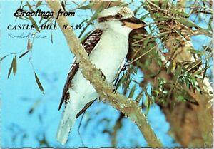 postcard Australia, NSW - Greetings from Castle Hill - Kookaburra