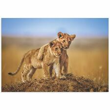 Lion Cub Art Lion Photography Images of Nature on Metal