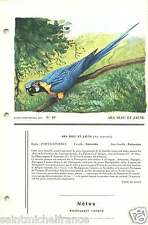 Ara bleu Ara ararauna - Blue-and-yellow Macaw FICHE CARD 1955 50s