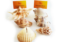 36 Brown White Seashell Place Card Holders Beach Wedding Nautical Party Decor