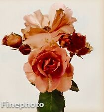 1980 Vintage 16x20 FLOWER Botanical Fine Art ROSE Photo Litho Plate, IRVING PENN