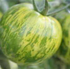 graines de tomate green zebra vendu en sachet de 30 graines