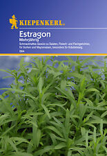 KIEPENKERL - Estragon 564 perennial herb seeds