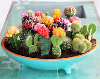 100PCS Seeds Mixed Cactus Flower Pot Room Home Gardening Decor Plants Planting
