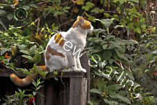 Relaxing Orange & White Cat Photograph by Andrew Starling Signed Pet Print 5x7