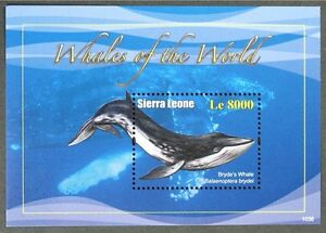 B193 SIERRA LEONE 2010 Whales of the World S/S MNH