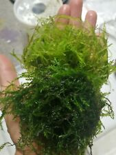 willow moss and java moss, live aquarium plant, Two bags,