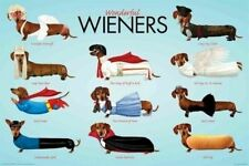 WENER DOGS ~ WONDERFUL COSTUMES ~ 24x36 ANIMAL POSTER ~ Dog Dachshund