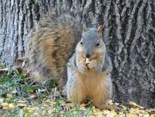 Whole Cleaned Kernel Corn Squirrel, Deer, Turkey, Bird Feed/ Corn Hole Bags
