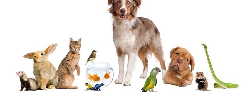 Pet Shop Post Australia