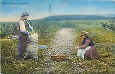 Potatoe harvest agriculture Hungary hungarian types early postcard