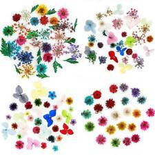 US 12 Colors Real Dried Flowers 3D Nail Art Decors DIY Tips Manicure Gypsophila