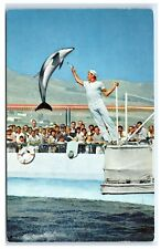 Postcard A High Jumping Porpoise, Marineland of the Pacific, Ca 1962 B46
