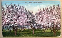 San Francisco CA Pink Apple Trees In Bloom Postcard Vintage Old Card Mitchell
