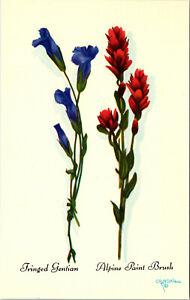 Fringed Gentian Alpine Paint Brush Teton Harrison Crandall Art Vintage Postcard