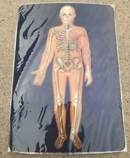 Educational Motion Card Human Body Skeletal, Muscles, Digestive System