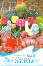 1 Bag 10 SEED Mixture Of Cactus Flower Color Plant F006