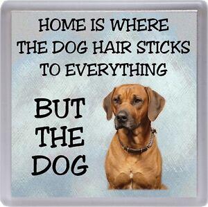"Rhodesian Ridgeback Coaster ""Home is Where the Dog Hair  ......"" by Starprint"