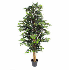 Ficus Tree Standing Dried & Artificial Flowers