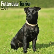 Patterdale Terrier Calendar 2021 Premium Dog Breed Calendars