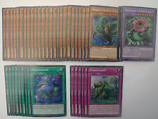 Predaplant Deck * Ready To Play * Yu-gi-oh
