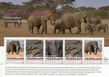 Netherlands 2017 MNH Endangered Mammals African Bush Elephants 5v M/S Stamps