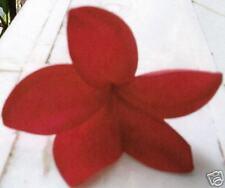 "Plumeria Cutting 15"" 2 Tips Daeng Kama Yee"