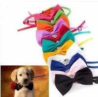 Cat Dog Pet dicky pup puppy kitten bow tie novelty head dress 15 colour