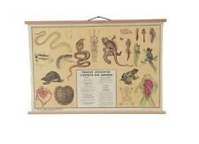 Vintage Zoology Chart, Amphibians and Reptiles Anatomy and Physiology Chart, Map