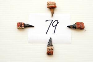 """1"""" SINGLE SPURS, EASTERN WILD TURKEY LOT OF FOUR lot #79"""