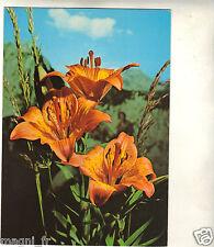 Fleurs - cpsm - Lys  ( i 5230)
