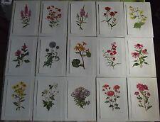 15 Ancienne Affiches Scolaire Botanique  Croix de Jérusalem,Anémone du Japon