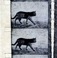 Advertising 16mm Film Reel-Seattle First National Bank 1965 Pussyfoot Rev (SB44)