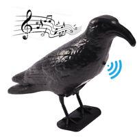 Corvo Dissuasore Piccioni con Suoni Sensore Movimento Repellente Colombi Uccelli