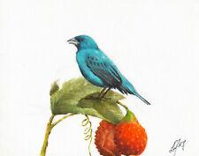 Original Oil Bird Portrait Painting Artwork Indigo Bunting Lychee Fruit Blue