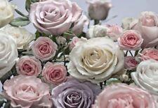 Rouleaux de papier peint roses Komar