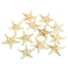 12 x White Knobby Starfish 5cm -7cm Sea Star Shell Beach Display Decor C4H5