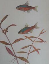 New listing Vintage Antique Aquarium Live Life Art Print Beautiful Neon Tetra Tropical Fish