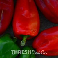 Feher Ozon Paprika Free Gift Sweet Pepper 25 Seeds