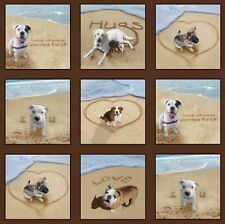 Dogs Sand Scribbles 15 Blocks Quilt panel Fabric 100% Cotton Elizabeth Studio