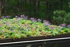 2500+ Samen Blühende Dächer - Sedum-Blumen-Kräuter - Dachbegrünung - Steingarten