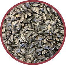 80 lbs Black Oil Sunflower Seeds Wild Bird Feed Treat for Outside Feeders Trays