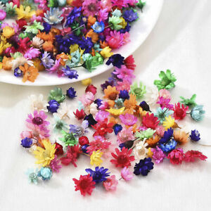 200x Real Dried Flowers For DIY Epoxy Resin Candle Jewellery Making Art Craft