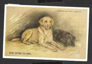 """The Home Guard"" - Labrador and Puppy Signed Mac Ref 18817"